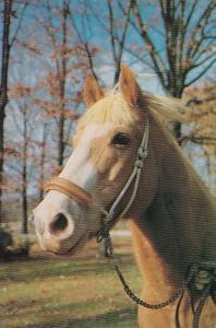Elvis Presley Palomino Quarterhorse Rising Sun