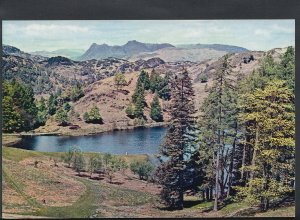 Cumbria Postcard - Langdale Pikes From Tarn Hows   RR2061