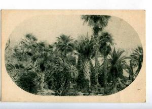 232472 Abkhazia Sukhum Park subtropical flora Vintage postcard