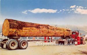 Tons of Toothpicks Logging, Timber Unused