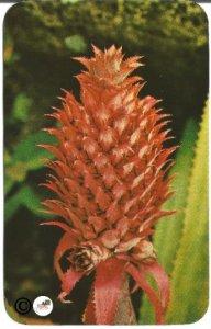 Pineapple Flower Honolulu Hawaii Rounded Edges 1950's Plastichrome Postcard