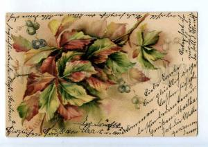 240529 Bouquet w/ Berries Vintage POST 1901 year postcard