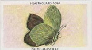Lifeguard Products Vintage Trade Card 1955 British Butterflies No 11 Green Ha...