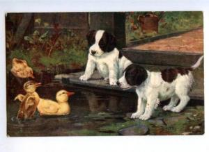 148219 English Setter PUPPY Duckling by COBBS Vintage TUCK PC