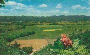 Jamaica Super Estate Jamaica B.W.I. Vintage Postcard 07.32