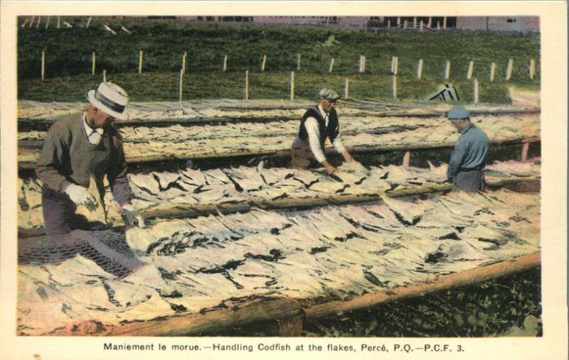 Handling Codfish at the Flakes - Perce QC, Quebec, Canada - WB
