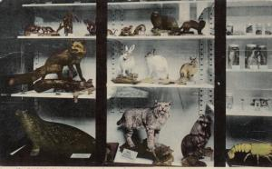 PROVIDENCE, Rhode Island, 1900-10s ; Mammals , Roger Williams Park Museum