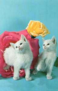 Two Cats Roses