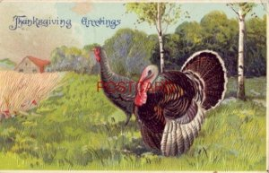 1912 embossed THANKSGIVING GREETINGS a tom and hen in field
