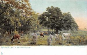 F15/ Mobile Alabama Postcard c1910 Convent Grounds Cows 7