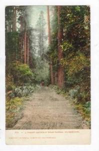 A Forest Driveway Near Tacoma, Washington, 1900-1910s