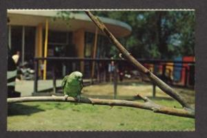 MA Parrot  Franklin Zoo BOSTON MASSACHUSETTS Postcard