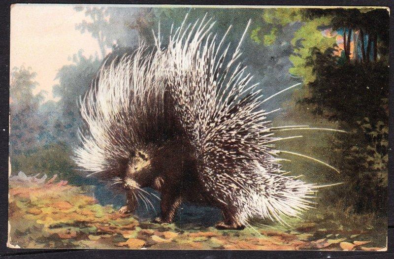 Porcupine - early DB card