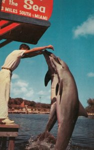 Dolphins , Theatre of the Sea , MIAMI , Florida , 50-60s