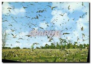 Postcard Modern Sooty tern colony an Bord Island Seychelles