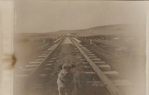 RP: Dog on railroad tracks  , 1900-10s