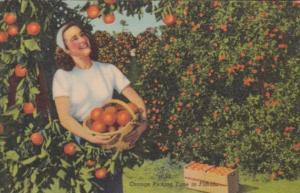 Orange Picking Time In Florida Curteich