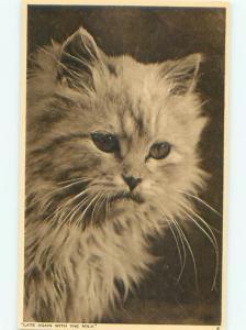 Pre-Linen Close-Up CUTE KITTEN CAT AC5438