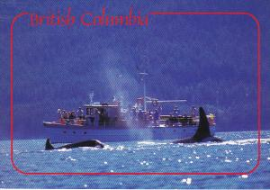 Killer Whale Watching British Columbia Canada