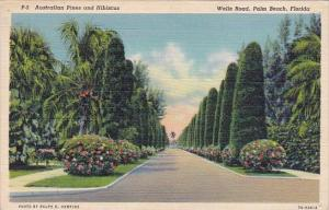 Australian Pines And Hibiscus Wells Road Palm Beach Florida Curteiclh