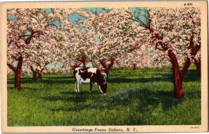 Greetings from Sidney NY Vintage Postcard P17