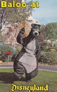 Baloo Bear at Walt Disney Disneyland Postcard