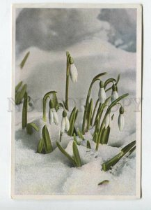 428081 Flower Galanthus nivalis Vintage Sammelwerk Tobacco Card w/ ADVERTISING