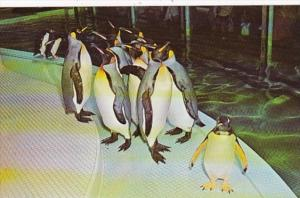 Missouri St Louis Penguins St Louis Zoo
