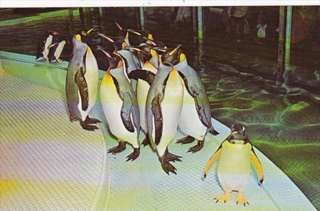 Missouri St Louis Penguins St Louis Zoo