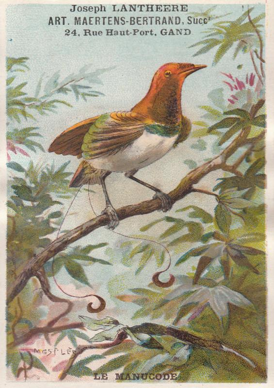 CHROMO LITHO JOSEPH LANTHEERE TRADE CARD LE MANUCODE BIRD MESPLE SIGNED FANTASY