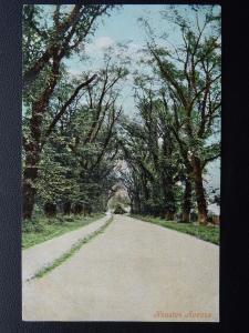 Northamptonshire Wellingborough KNUSTON Avenue c1906 Postcard by Valentine