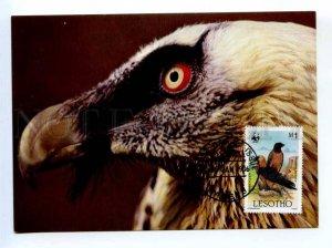 d419380 LESOTHO 1986 year WWF Bird Eagle maximum card