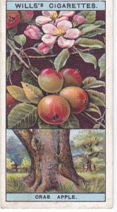 Cigarette Cards Wills Flowering Trees & Shrubs A series No 4 Crab Apple