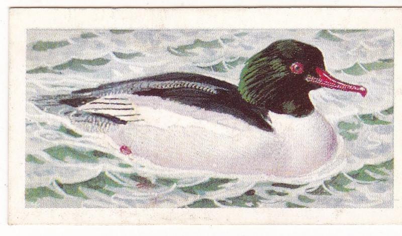 Trade Card Brooke Bond Tea Wild Birds in Britain 36 Goosander