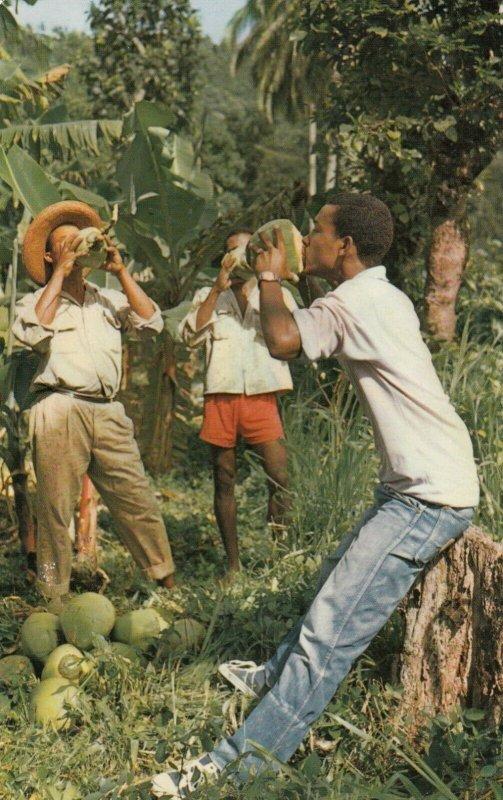 MARTINIQUE , 50-60s; Drinking Coconut milk