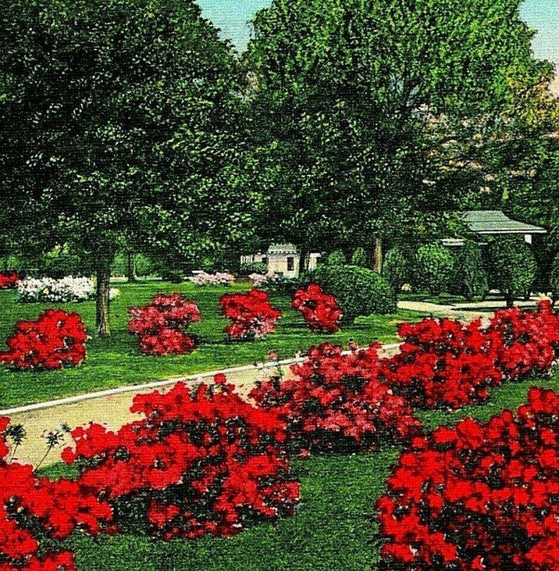 Mobile Alabama AL Red Azaleas in Lyons Park Unused UNP Vtg Linen Postcard
