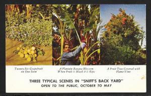 Sniff's Date Gardens Indio CA unused c1950's