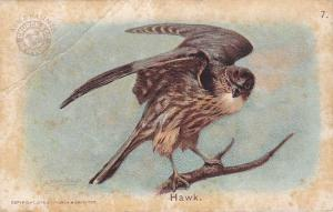 Hawk - Bird Series of 1908 - Arm & Hammer Trade Card