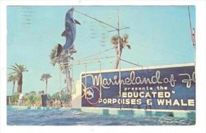 Porpoise highjump, Marineland, Florida , PU-1970