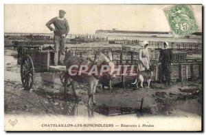 Old Postcard Donkey Mule Chatelaillon the Boncholeurs Reservoirs mussels oyst...