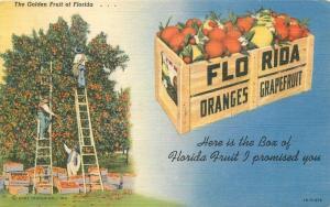 Agriculture farming 1950s Ladders Florida Oranges Teich linen postcard 6854