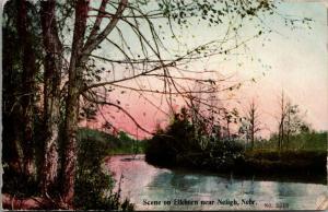 Neligh Nebraska~Trees on Riverbank of Elkhorn River~Pink Sky~1909 Postcard