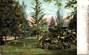 New York Syracuse Scene In Walnut Park 1909