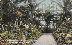 Wisconsin Milwaukee Palm Garden In Conservatory Mitchell Park 1909