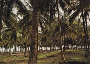 LAGOS STATE, Coconut Palm Forest, Badagry Beach, NIGERIA, 50-70s