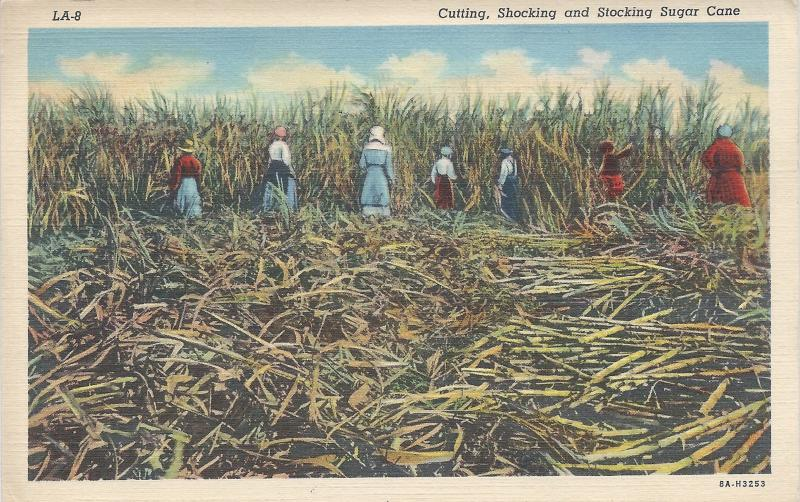 Cutting Shocking and Stocking Sugar Cane, Early Linen Postcard, Unused