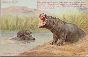 Hyppopotamus Animal Series III South Africa Unused H. Egersdorfer Postcard E32