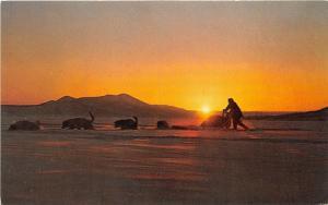 Arctic Region of Alaska~Trapper w Dog Sled Team in -40 Temps @ Midnight~1950s Pc