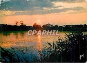 Postcard Modern Colors and Light of Camargue in France (B R) Sunset on rice f...