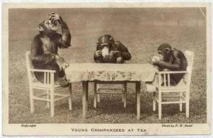 Young Chimpanzees at Tea, London, UK, 30-50s